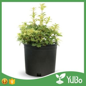 1 Gallon Black Plastic Planter Pots, 1 Gallon Pot Size