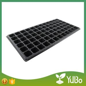 seedling trays for starting vegetable seeds, sowing seeds in trays, transplant seedlings from seed tray