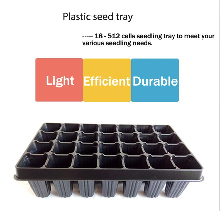 seedling in a tray for planting