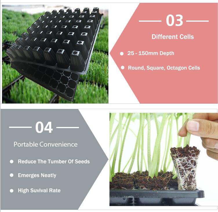 tree seedling trays