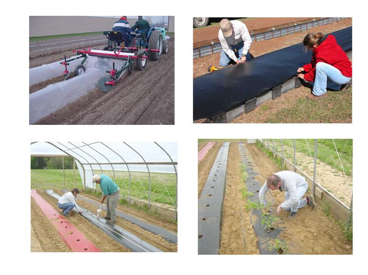 mulching agriculture